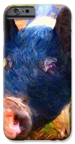 Charlotte iPhone Cases - Little Miss Piggy iPhone Case by Wingsdomain Art and Photography