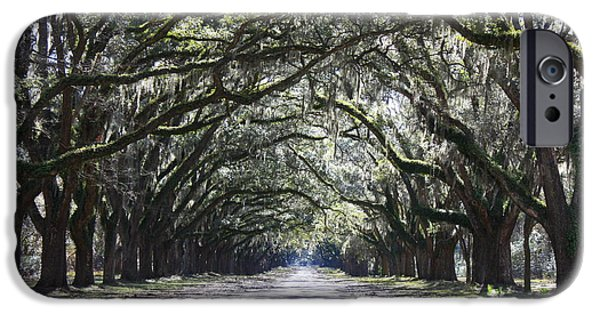 Old Country Roads Photographs iPhone Cases - Live Oak Lane in Savannah iPhone Case by Carol Groenen