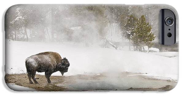 IPhone 6 Case featuring the photograph Bison Keeping Warm by Gary Lengyel
