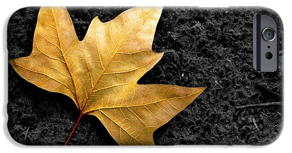 Pathway iPhone Cases - Lone Leaf iPhone Case by Carlos Caetano