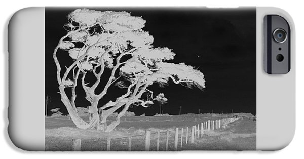 IPhone 6 Case featuring the photograph Lone Tree, West Coast by Nareeta Martin