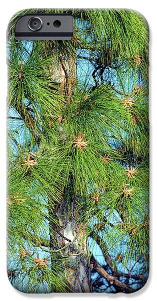 Pine Tree Pollen iPhone 6 Cases | Fine Art America