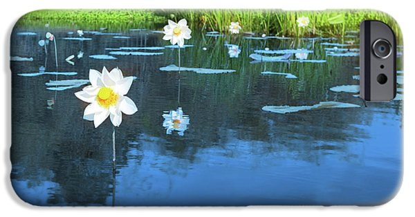 Innocence iPhone Cases - Lotus flower iPhone Case by MotHaiBaPhoto Prints