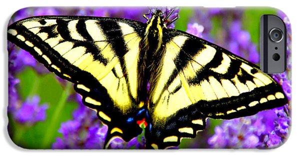 Flight iPhone Cases - Macro Swallowtail Butterfly on Lavender Stalks iPhone Case by Debra Orlean