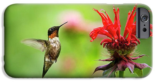 Male Ruby-throated Hummingbird Hovering Near Flowers IPhone 6 Case