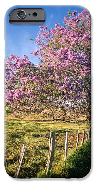 Jacaranda Tree iPhone Cases - Maui Upcountry iPhone Case by Dana Edmunds - Printscapes