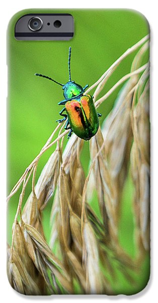 IPhone 6 Case featuring the photograph Mini Metallic Magnificence  by Bill Pevlor