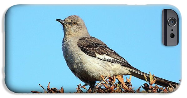 Mockingbird iPhone Cases - Mockingbird . 7682 iPhone Case by Wingsdomain Art and Photography