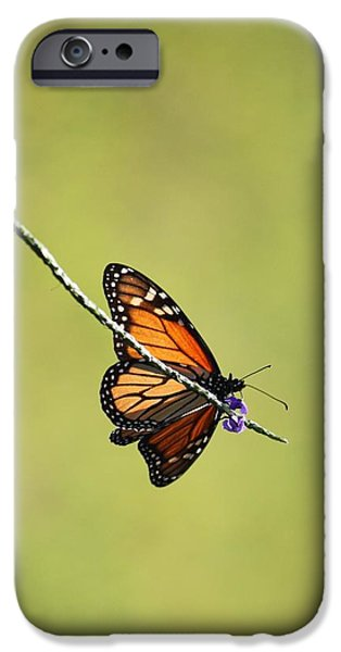 Sunlight On Flowers iPhone Cases - Monarch and Natural Green Canvas iPhone Case by Carol Groenen