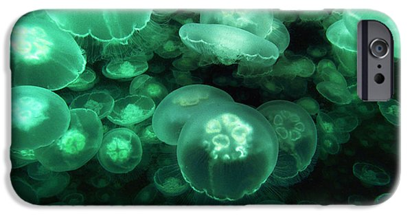 Prince William iPhone Cases - Moon Jelly Aurelia Aurita Group iPhone Case by Hiroya Minakuchi