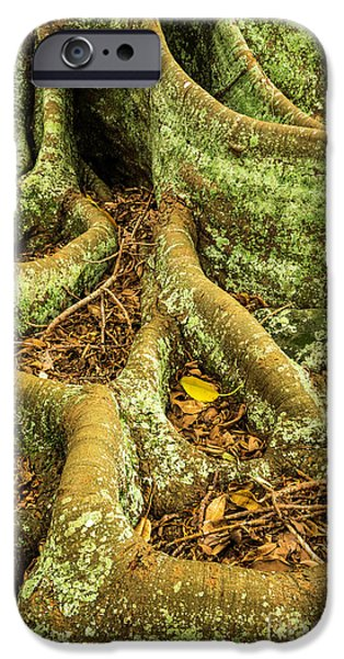 IPhone 6 Case featuring the photograph Moreton Bay Fig by Werner Padarin