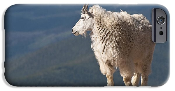 IPhone 6 Case featuring the photograph Mountain Goat by Gary Lengyel