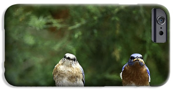 Feeding Birds iPhone Cases - Mr and Mrs iPhone Case by Rob Travis