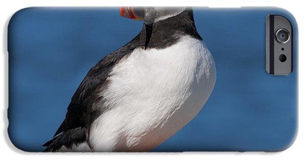 Sea Birds iPhone Cases - My best side.. iPhone Case by Nina Stavlund