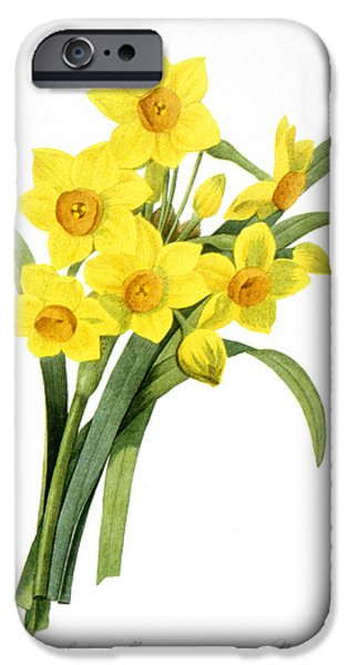1833 Photographs iPhone Cases - Narcissus (n. Tazetta) iPhone Case by Granger