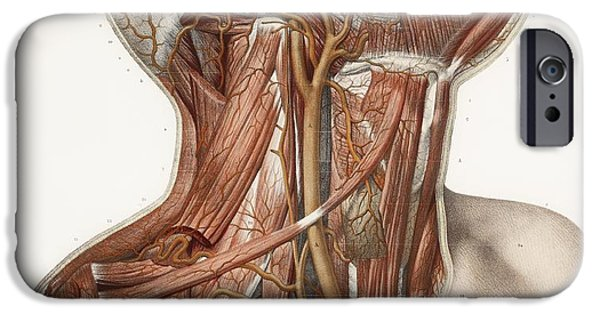 Recently Sold -  - Cut-outs iPhone Cases - Neck Vascular Anatomy, Historical Artwork iPhone Case by