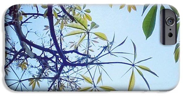 Green iPhone 6 Case - New #spring Leaves On My Tree In The by Shari Warren