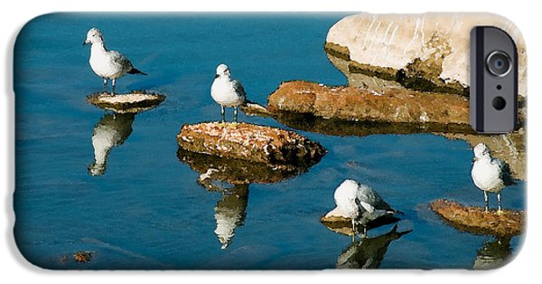 Seagull iPhone Cases - Non-Conformist iPhone Case by Betty LaRue