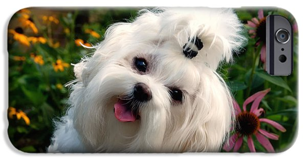 Maltese Puppy iPhone Cases - Nuttin But Love iPhone Case by Lois Bryan