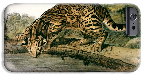 Audubon iPhone Cases - Ocelot (felis Pardalis) iPhone Case by Granger