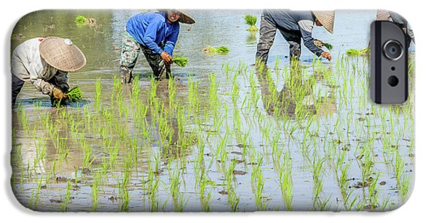 Paddy Field 1 IPhone 6 Case by Werner Padarin