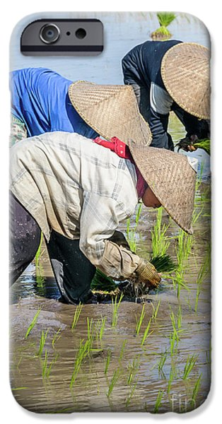 Paddy Field 2 IPhone 6 Case by Werner Padarin