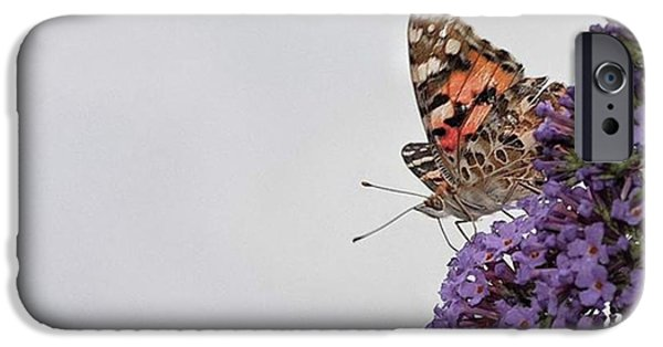 iPhone 6 Case - Painted Lady (vanessa Cardui) by John Edwards
