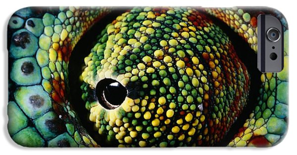 Chameleon iPhone Cases - Panther Chameleon Eye iPhone Case by Daniel Heuclin and Photo Researchers