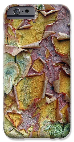 Paperbark Maple Tree IPhone 6 Case by Jessica Jenney