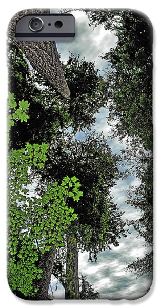 Tall Trees iPhone Cases - Paradise to lovers of big trees - Olympic National Park WA iPhone Case by Christine Till