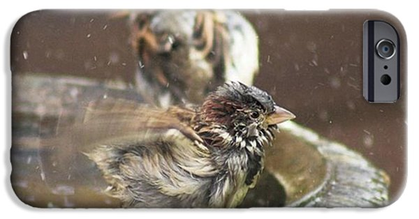 iPhone 6 Case - Pass The Towel Please: A House Sparrow by John Edwards
