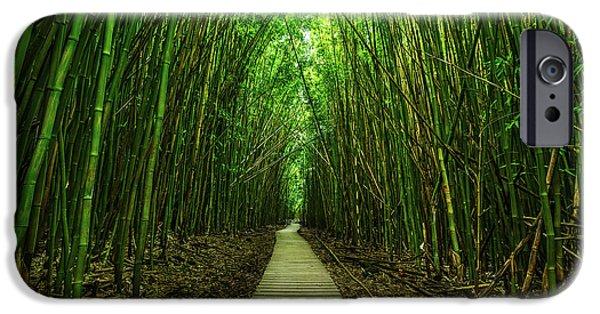 Tree iPhone 6 Case - Path To Zen by Jamie Pham