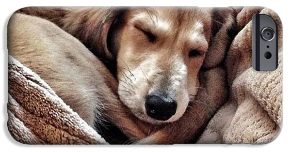 iPhone 6 Case - Peace At Last #saluki by John Edwards