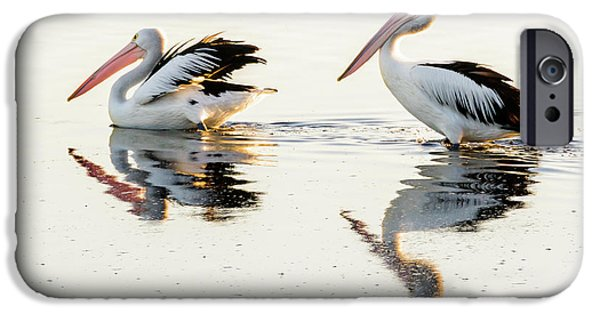 Pelicans At Dusk IPhone 6 Case by Werner Padarin
