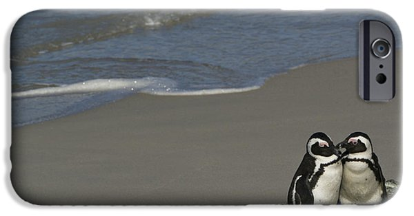 Red Rock iPhone Cases - Penguin Pair iPhone Case by Brian Kamprath