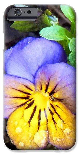 Pensees Bicolores IPhone 6 Case