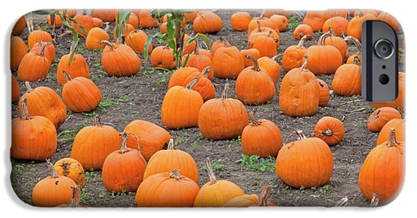 Farm Stand Photographs iPhone Cases - Petes Pumpkin Patch iPhone Case by John Stephens