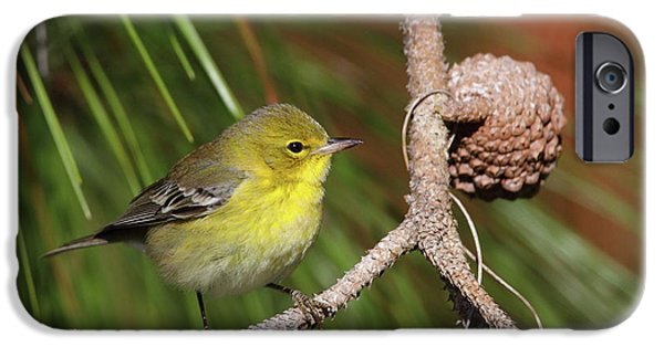 Warbler iPhone Cases - Pine Warbler iPhone Case by Bruce J Robinson