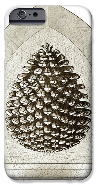 Pines Mixed Media iPhone Cases - Pinecone iPhone Case by Charles Harden