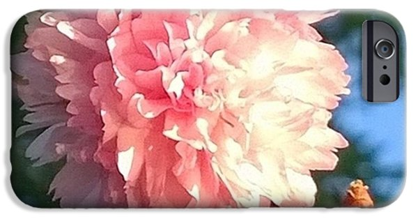 Pink Flower Bloom In Sunset. #flowers IPhone 6 Case