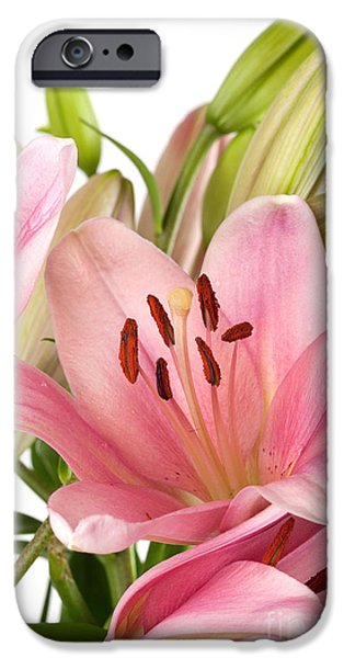 Isolated iPhone Cases - Pink Lilies 07 iPhone Case by Nailia Schwarz
