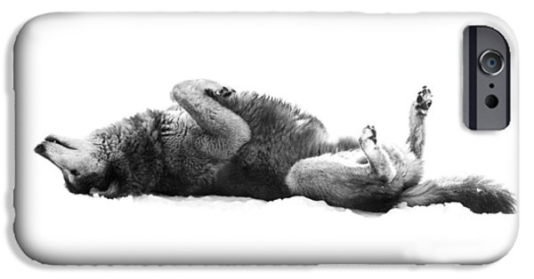 Wolf Photo iPhone Cases - Playful Gray Wolf Photo iPhone Case by Stephanie McDowell