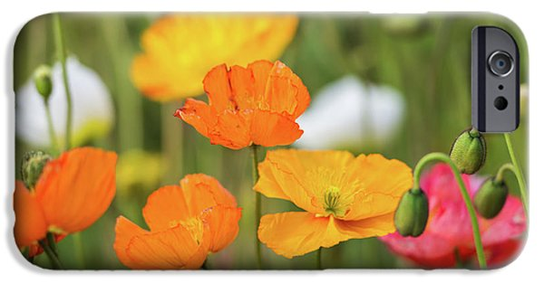 IPhone 6 Case featuring the photograph  Poppies 1 by Werner Padarin