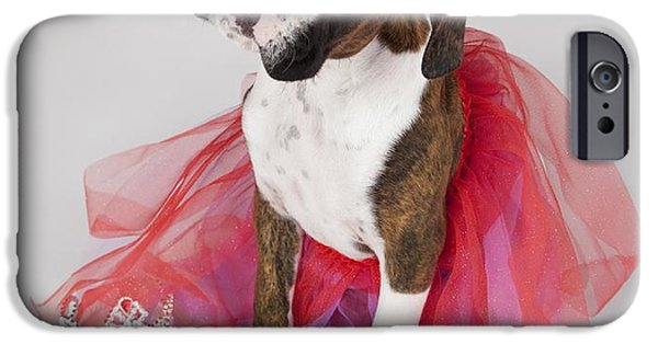 Ballet Dancers Photographs iPhone Cases - Portrait Of Dog Wearing Tutu iPhone Case by Leah Hammond