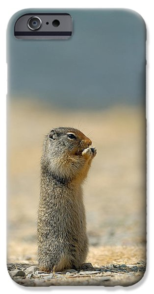 Prairie iPhone Cases - Prairie Dog iPhone Case by Sebastian Musial