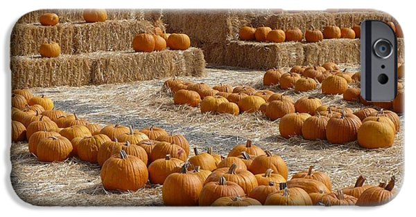 Fall Scenes iPhone Cases - Pumpkins on Bales iPhone Case by Carol Groenen