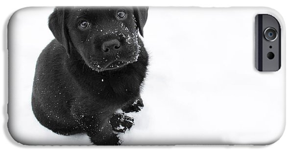 Puppies iPhone Cases - Puppy in the Snow iPhone Case by Larry Marshall