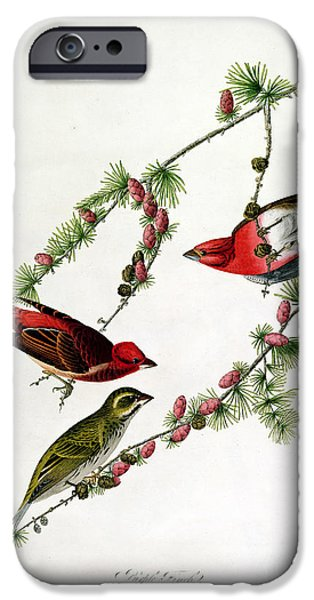 Fruit Tree iPhone Cases - Purple Finch iPhone Case by John James Audubon