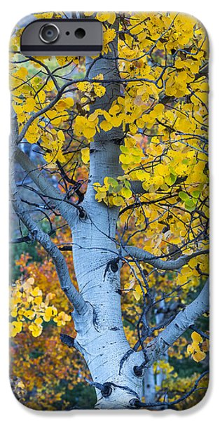 Quaking Aspen IPhone 6 Case
