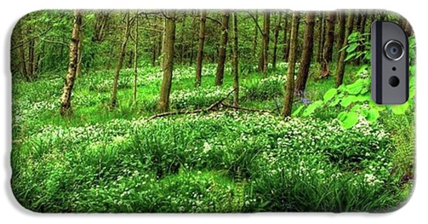 Ramsons And Bluebells, Bentley Woods IPhone 6 Case